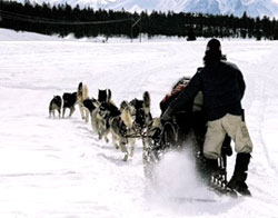 Reno dogsledding, Sierra Adventures, Nevada, NV