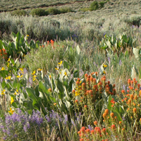 Sierra Nevada Wildflower & Photography Hiking Tours